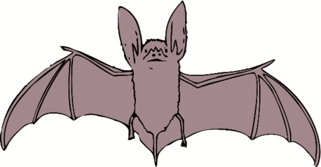 bat big eared