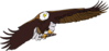eagle aquila frontale architet 01 clip art