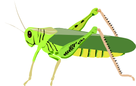 grasshopper cricket cavalletta architetto fr 01