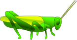 grasshopper grass hopper 02