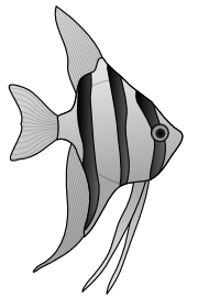 altum angelfish 01