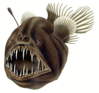 Humpback anglerfish clip art