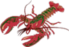Lobster 07 clip art