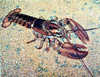 Lobster 5 clip art