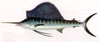 Sailfish clip art