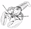 lobster 8 clip art