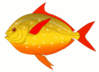 red finned fish clip art