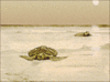 sea tortoises ashore turtle clip art