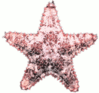 starfish full clip art