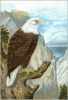 Bald Eagle 5 clip art