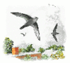 Chimney Swift clip art