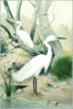 Little Egret clip art