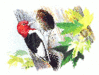 Red Headed Woodpecker clip art