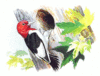 Red Headed Woodpecker 5 clip art