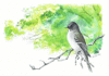 Wood Pewee 5 clip art