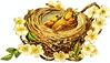 two-yellow-birds-nest clip art