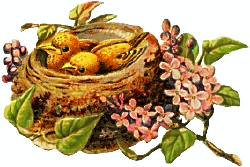 two-yellow-nest