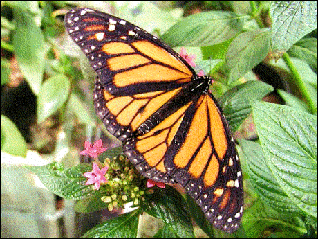 butterfly image 2