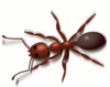 Ant copper colored clip art