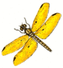amber wing male clip art