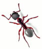ant red stylized clip art
