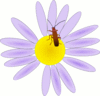 bug on a flower clip art