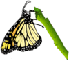butterfly on twig clip art