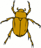 chafer bug clip art