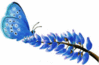 mission blue butterfly clip art