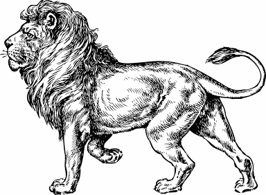 Lion BW sketch