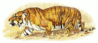 hunting tiger clip art