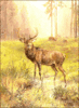 deer large buck by water morning clip art