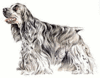 American Cocker Spaniel clip art