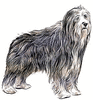 Bearded Collie clip art