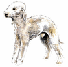 Bedlington Terrier clip art