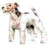 Fox Terrier clip art