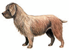 Glen of Imaal Terrier clip art