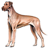 Great Dane clip art