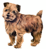Norfolk Terrier clip art