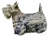 Scotch Terrier clip art