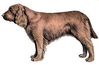 Sussex Spaniel clip art