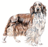 Welsh Springer Spaniel clip art
