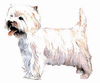 West Highland White terrier clip art