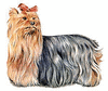 Yorkshire Terrier clip art