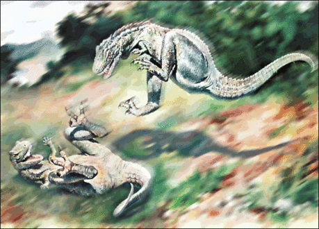 Dryptosaurus fighting