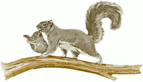squirrel w baby