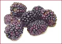 berries black