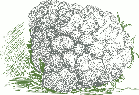 cauliflower 2 tone