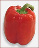bell pepper red clip art