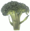 broccoli large clip art